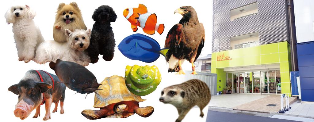 初めての人!癒されたい人!動物が好きな人!プレミアム校舎見学ツアー